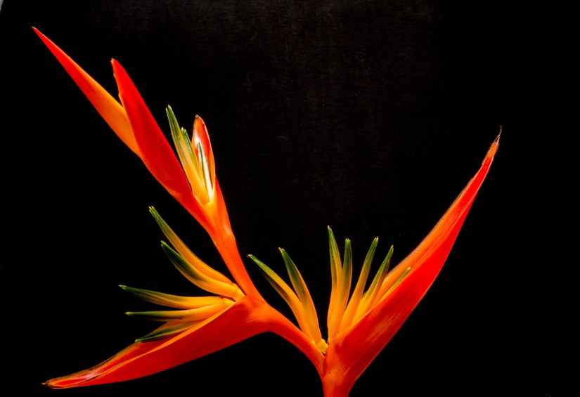 red flower bloom blossom