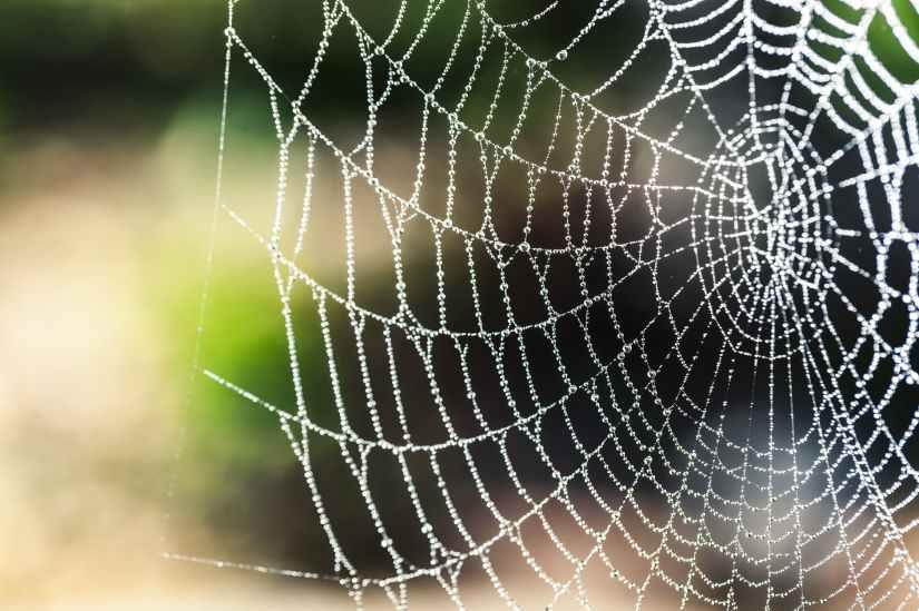 arachnid artistic blur bokeh